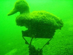 One of the underwater attractions at Big Bay Point