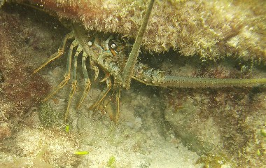The Fish of Cozumel | Chronicle of an older diver