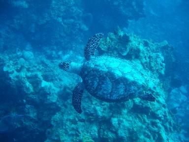 cozd5a-turtle