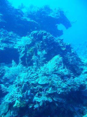cozd6-soft-coral
